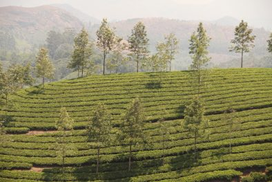Best vacations in South India_Spice Routes