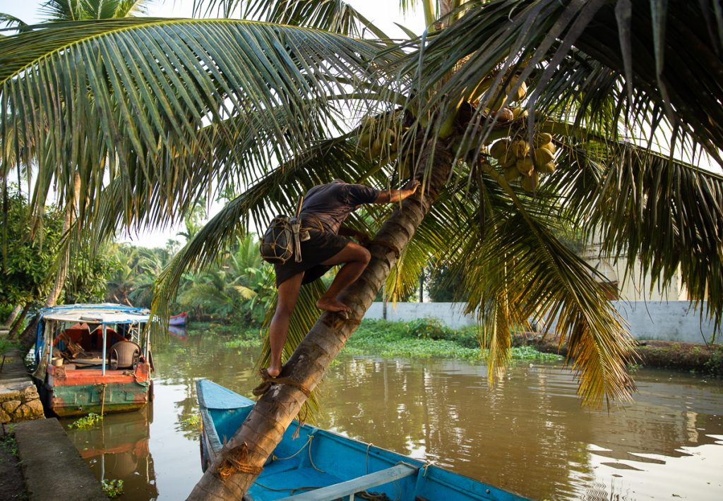 Alleppey Backwater Houseboat Tour with Toddy Tapping Activities